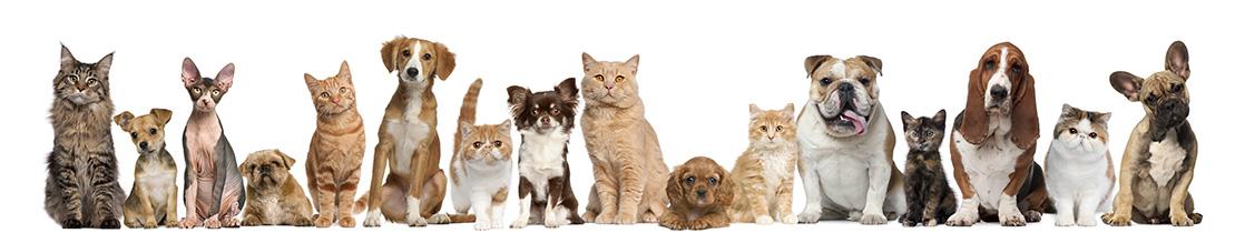 Huisdieren producten met naam of foto